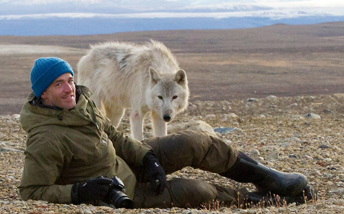 Gordon Buchanan and a wild polar wolf